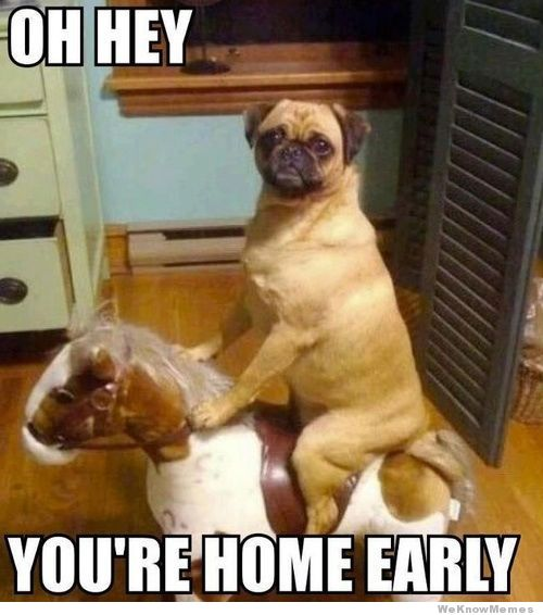 Dog Memes Oh hey You're home early