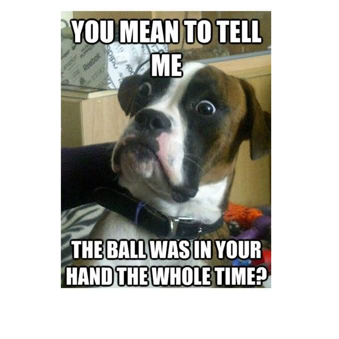 Dog Memes you mean to tell me the ball was in your