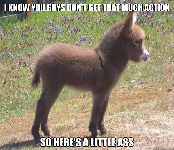 Donkey Meme I know you guys don't get that much action
