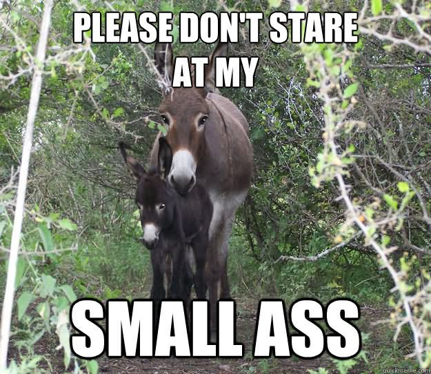 Donkey Meme Please don't stare at my small ass