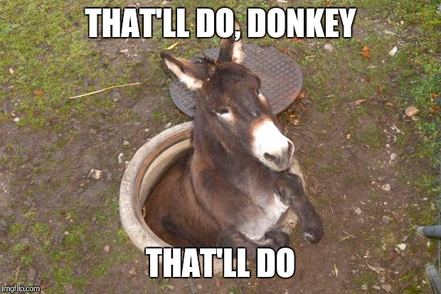 Donkey Meme That'll do donkey that'll do
