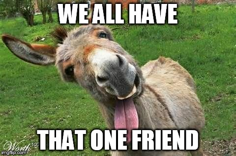 Donkey Meme We all have that one friend