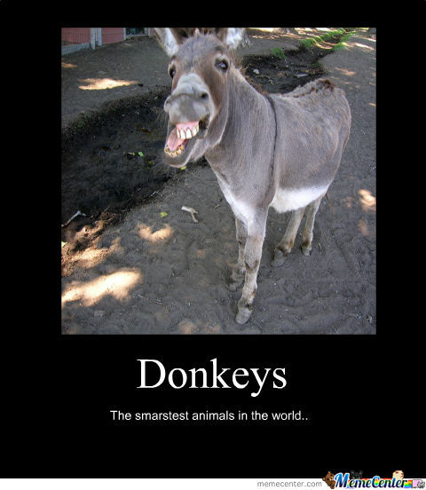 Donkey Meme donkeys the smartest animals in world