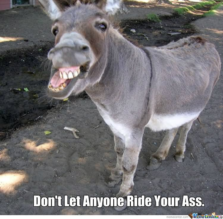 Dont let anyone ride your ass Donkey Meme