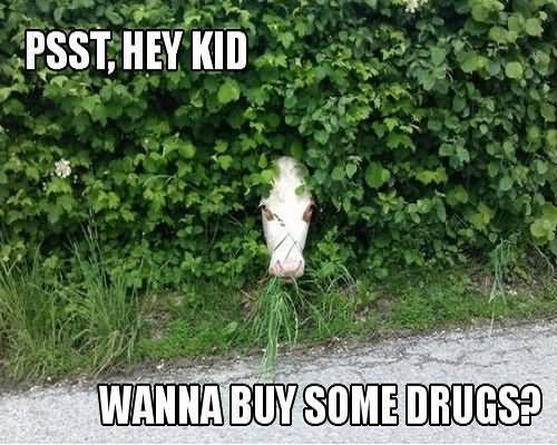 Drugs Meme Psst hey kid wanna buy some