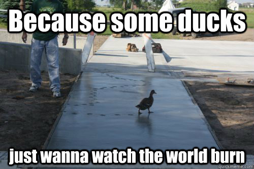 Duck Meme Because some ducks just wanna watch