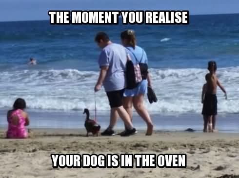 Duck Meme the moment you realize your dog is the oven