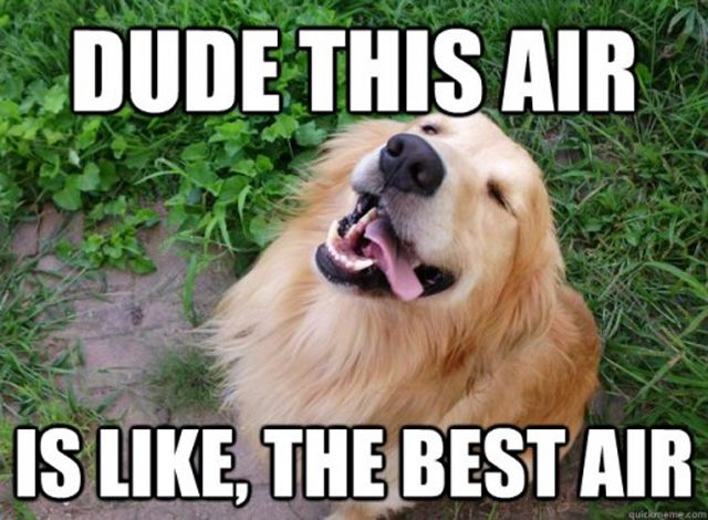 Dude this air is like the best air Dog Meme