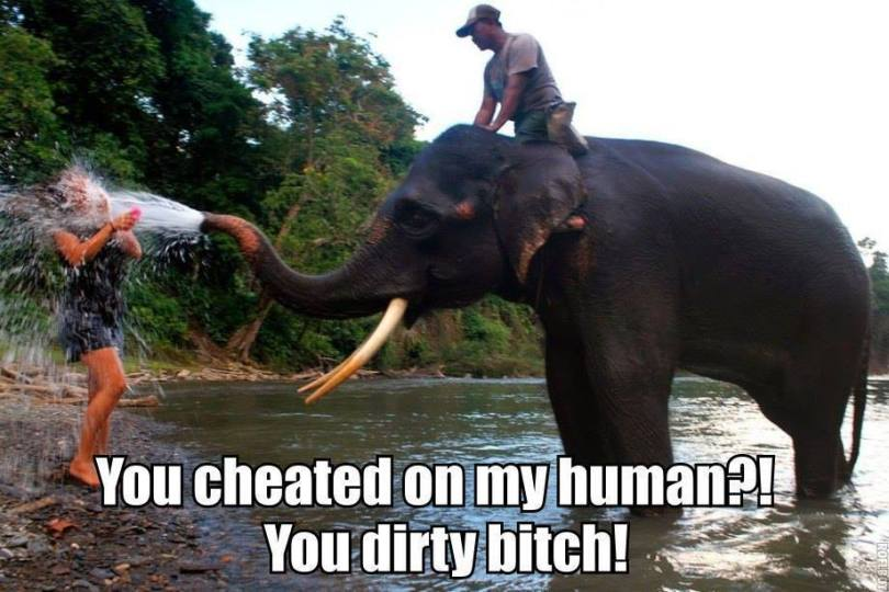 Elephant Meme You cheated on my human you dirty bitch