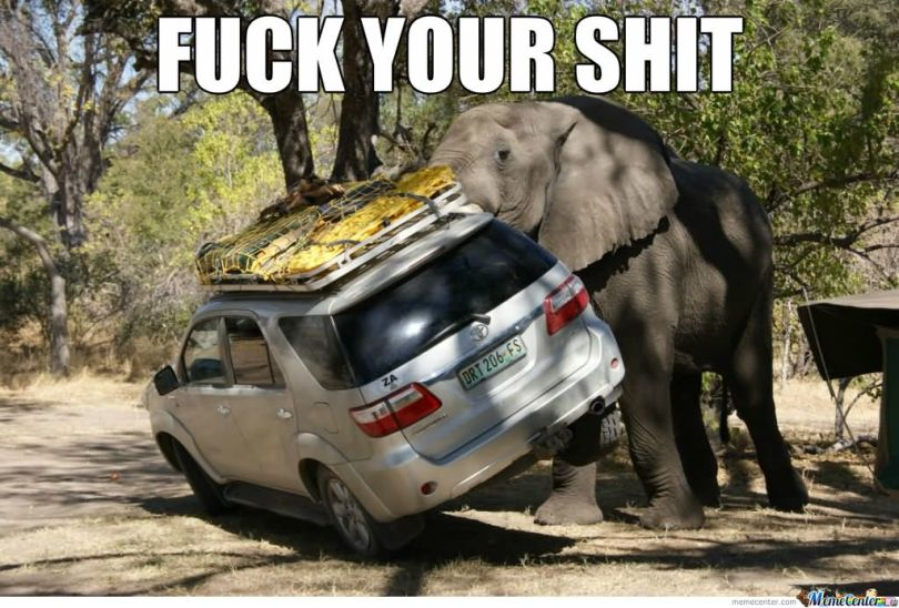 Elephant Meme fuck your shit