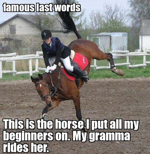 Famous last words this is the horse i put Horse Memes