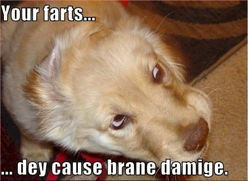 Fart Memes Your farts dey cause brane damige
