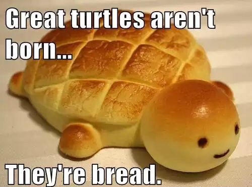 Food Meme Great turtles aren't born they're bread