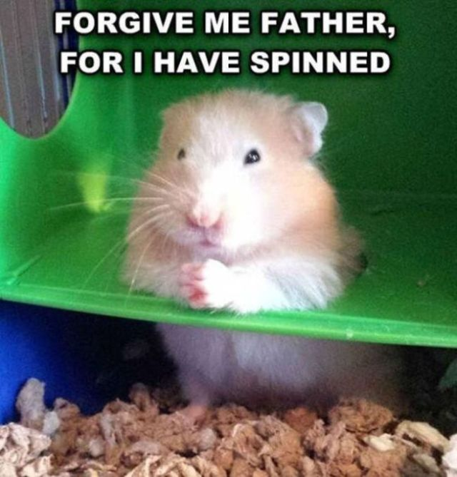 Forgive me father for i have spinned Hamster Meme