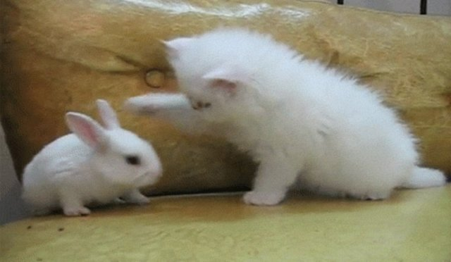 Funny Bunnies Memes