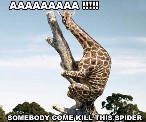 Giraffe Meme AAAAAAAAAAa somebody come kill this spider
