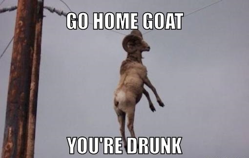 Go homw goat you're drunkGoat Memes