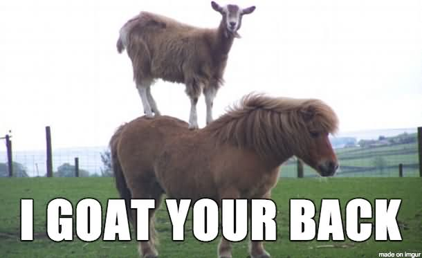 Goat Meme I goat your back