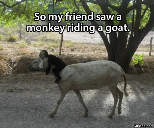 Goat Meme So my friend saw a monkey riding a goat