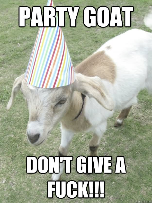 Goat Memes Party goat don't give a fuck