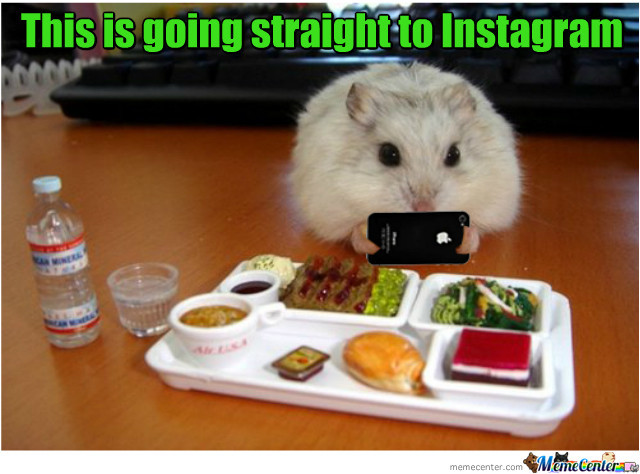 Hamster Meme This is going straight to instagram