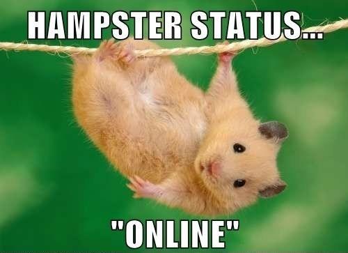 Hamster Memes Hampster status online