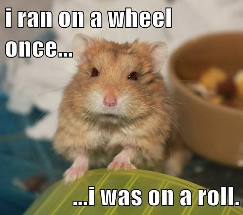 Hamster Memes I ran on a wheel once i was on a roll