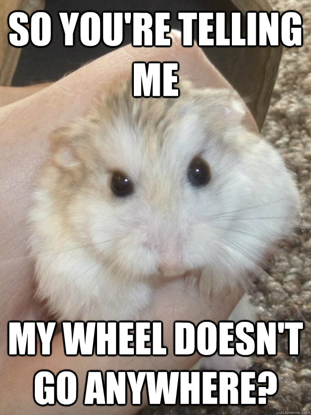 Hamster Meme So you're telling me my wheel doesn't go anywhere