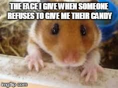 Hamster Memes The face i give when someone
