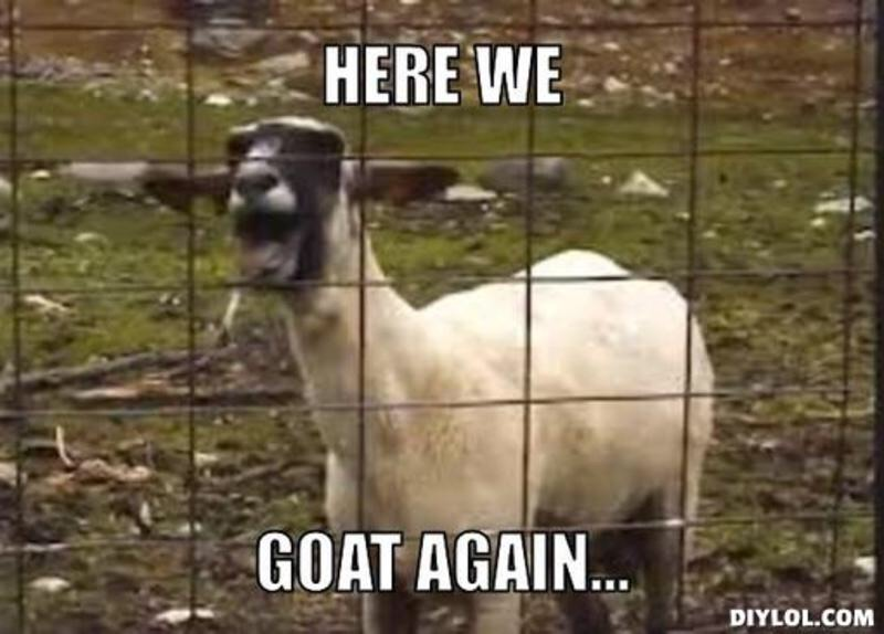 Here we goat again Goat Memes