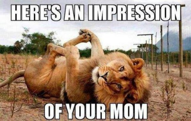Here's an impression of you mom Lion Meme