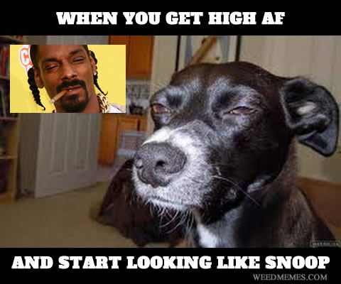 High Meme When you get high af and start