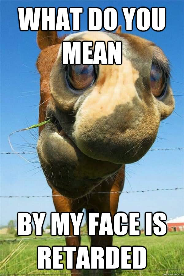 Horse Meme What do you mean my face is retarded