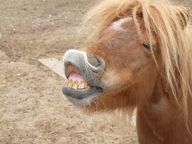 Horse Meme funny