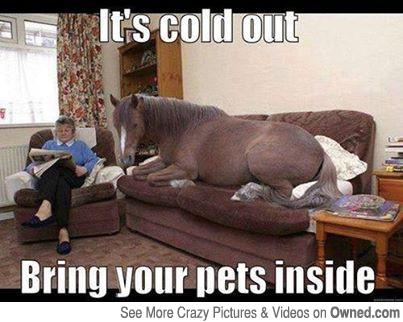 Horse Meme it's cold out bring your pets
