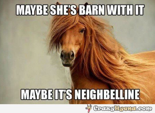 Horse Memes Maybe she's barn with it maybe its