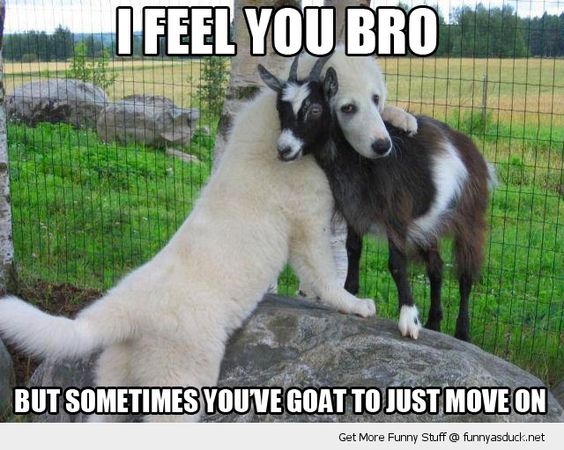 I feel you bro but sometimes you've goat to just Goat Memes