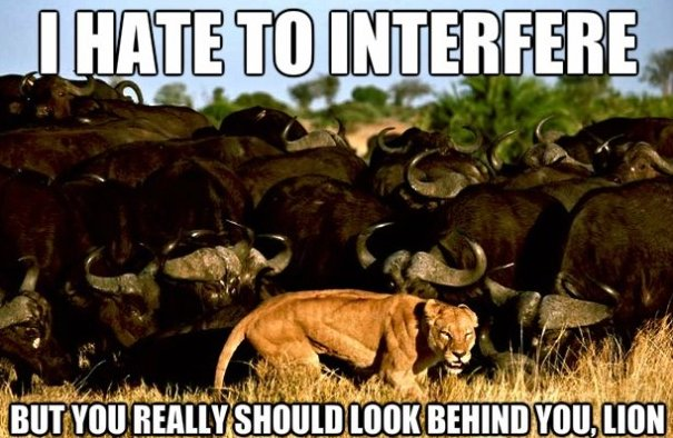 I hate to interfere but you really should look Lion Memes