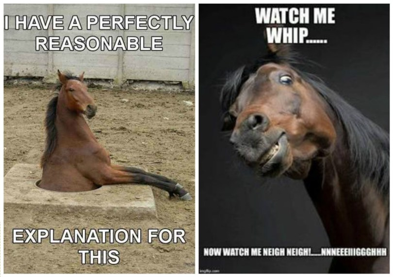 I have a perfectly reasonable Horse Memes
