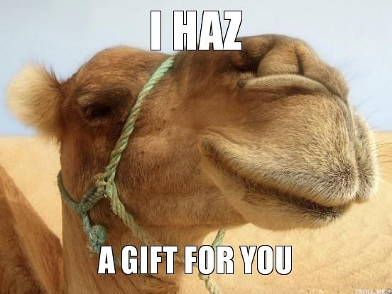 I haz a gift for you Camel Meme