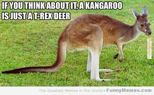 If you think about it a kangaroo is just a t rex Kangaroo Memes