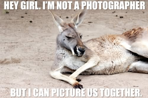 Kangaroo Meme Hey girl I'm not a photographer