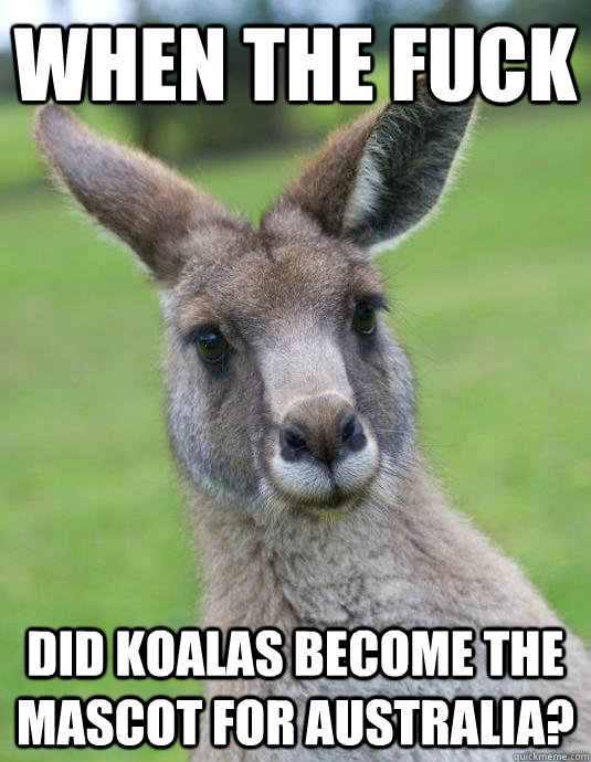 Kangaroo Meme When the fuck did koalas