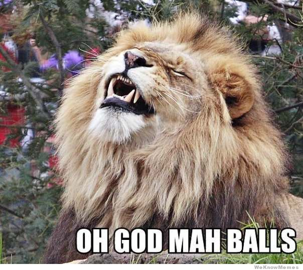 Lion Meme Oh god man balls