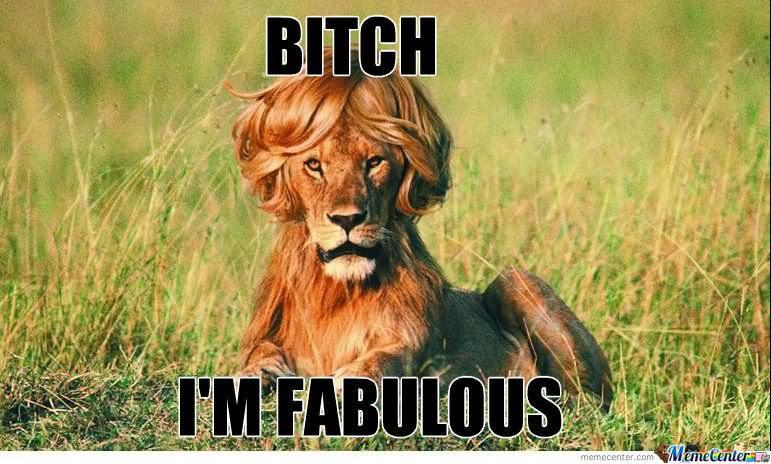 Lion Memes Bitch I'm fabulous