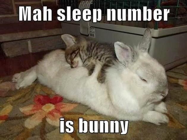 Mah sleep number is bunny Bunnies Memes