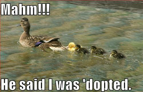 Mahm he said i was dopted Duck Meme