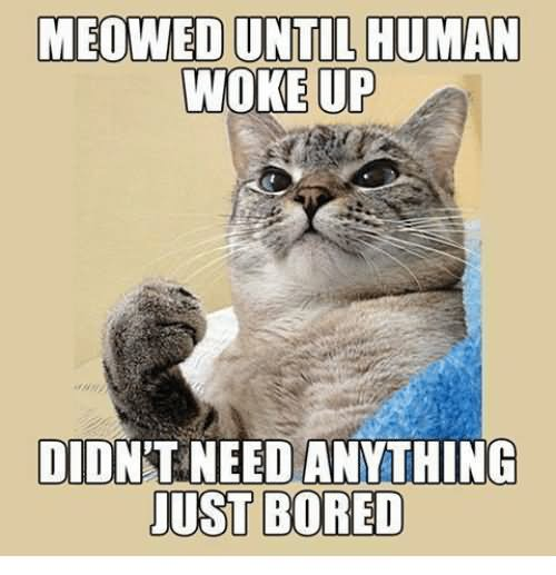 Meowed until human woke up didn't need anything just bored Meme