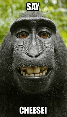 Monkey Memes Say cheese