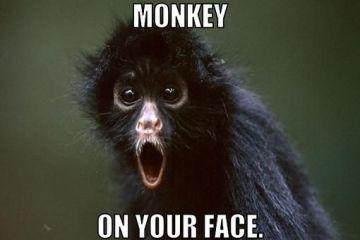 Monkey on your face Monkey Memes